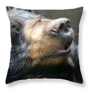 Black Bear Up Close Throw Pillow
