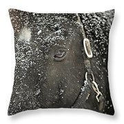 Black Beauty In A Blizzard Throw Pillow