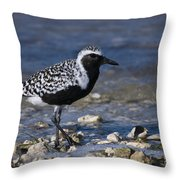 Black-bellied Plover Throw Pillow