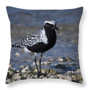Black-bellied Plover No.2 Throw Pillow