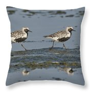 Black-bellied Plovers Throw Pillow