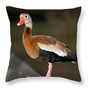 Black-bellied Whistling Duck Throw Pillow