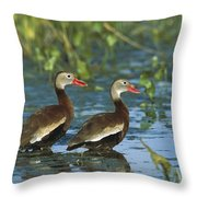 Black-bellied Whistling Ducks Wading Throw Pillow