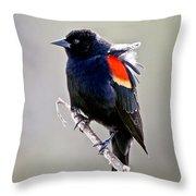 Black Bird Throw Pillow by Athena Mckinzie