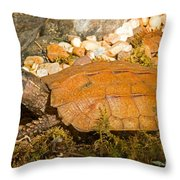 Black Breasted Leaf Turtle Throw Pillow