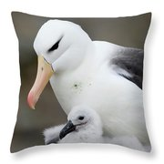Black-browed Albatross And Chick Throw Pillow