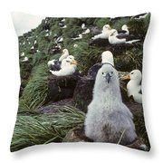 Black-browed Albatross Chick Sitting On Throw Pillow by Joel Bennett