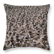 Black-browed Albatross Nesting Colony Throw Pillow by Art Wolfe