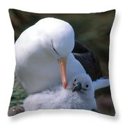 Black-browed Albatross With Chick Throw Pillow