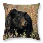 Black Bruin Throw Pillow