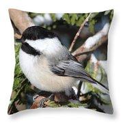 Black-capped Chickadee 9527 Throw Pillow