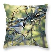 Black Capped Chickadee Throw Pillow