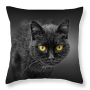 Black Cat Throw Pillow