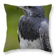 Black-chested Buzzard-eagle Throw Pillow