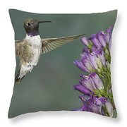 Black Chinned Hummingbird 2 Throw Pillow
