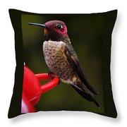 Black Chinned Male Hummingbird Throw Pillow