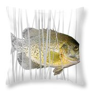 Black Crappie Pan Fish In The Reeds Throw Pillow
