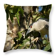 Black-crowned Heron Looking For Nesting Material Throw Pillow