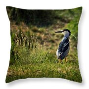 Black-crowned Night Heron At Carson Lake Wetlands Throw Pillow