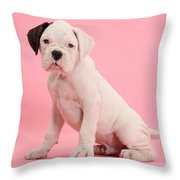Black Eared White Boxer Puppy Throw Pillow by Mark Taylor