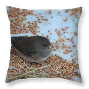 Black Eyed Junco Throw Pillow