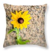 Black-eyed Susan Flower On A Gneiss Rock Throw Pillow