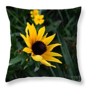 Black-eyed Susan Glows With Cheer Throw Pillow