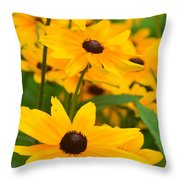 Black Eyed Susan - Flower Throw Pillow