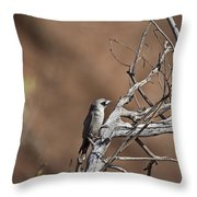 Black-faced Cuckoo Shrike Throw Pillow
