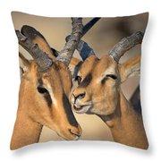 Black-faced Impalas Aepyceros Melampus Throw Pillow
