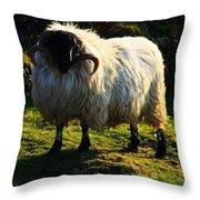 Black Faced Mountain Sheep Throw Pillow