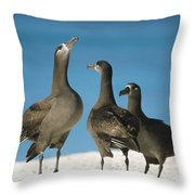 Black-footed Albatross Gamming Group Throw Pillow