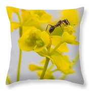 Black Garden Ant On Yellow Flower Throw Pillow