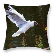 Black Head Gull - Preparing For Landing Throw Pillow