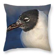 Black Headed Gull Portrait Throw Pillow