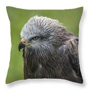 Black Kite 1 Throw Pillow