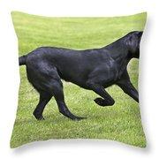Black Labrador Playing Throw Pillow