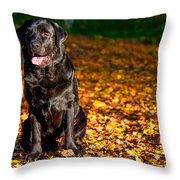 Black Labrador Retriever In Autumn Forest Throw Pillow