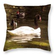 Black-necked Swan Throw Pillow