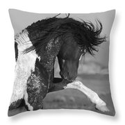Black Pinto Stallion Strikes Out Throw Pillow