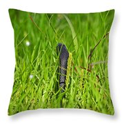 Black Racer Back Throw Pillow by Al Powell Photography USA