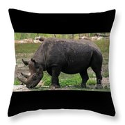 Black Rhino-19 Throw Pillow