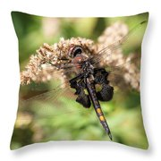 Black Saddlebags Dragonfly At Rest Throw Pillow