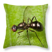 Black Scavenger Fly Throw Pillow