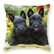 Black Scotties Throw Pillow by Greg Cuddiford