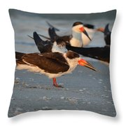 Black Skimmer Throw Pillow