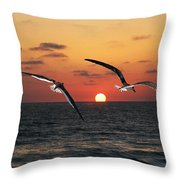 Black Skimmers At Sunset Throw Pillow