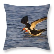 Black Skimmers Throw Pillow