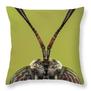 Black Soldier Fly 3x Throw Pillow