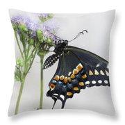 Black Swallowtail II Throw Pillow